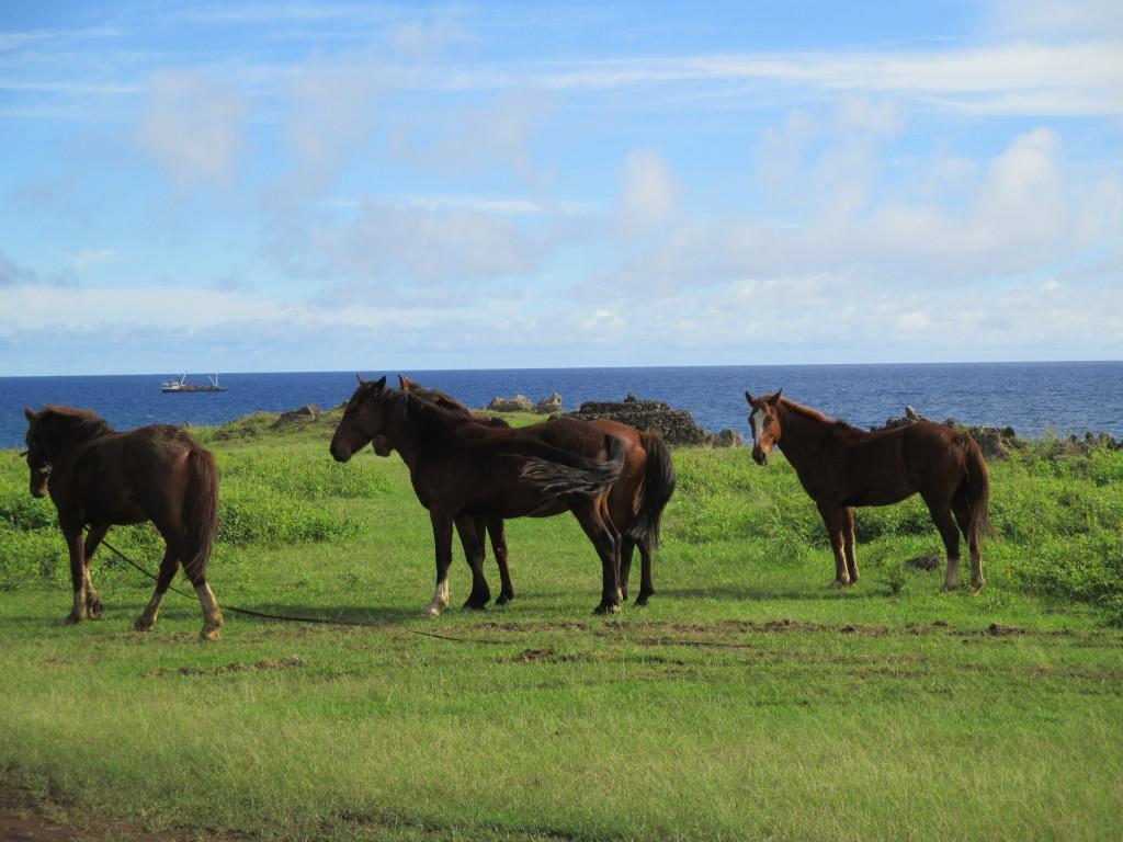 Rapa Nui wild horses