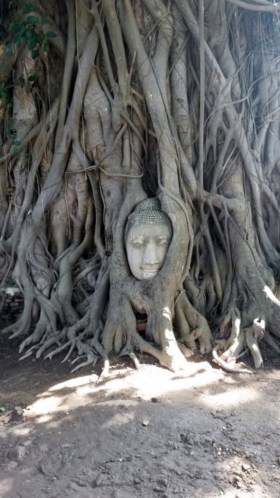 Wat Mahathat temple Buddha head in tree roots, Ayutthaya, Thailand