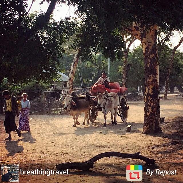 Myanmar Bagan ox cart