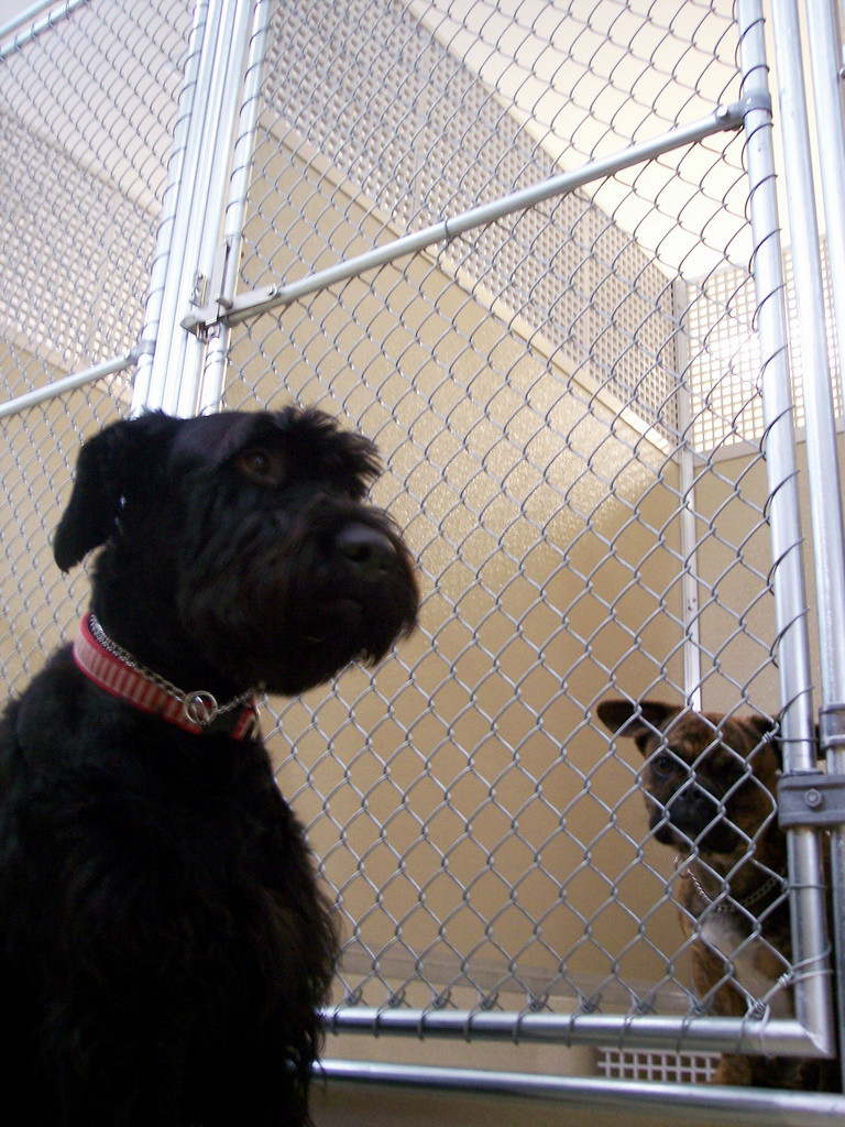 Kennel or pet sitter? - Image by JohnnyMrNinja via Wikipedia