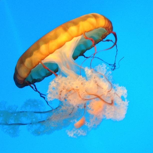 Jellyfish at National Aquarium - Image by Nick Pagano via Trover