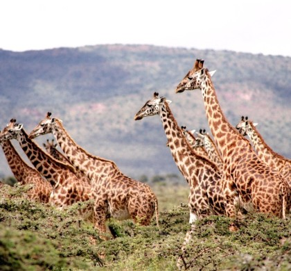 Don't Miss Out On These Wonderful Experiences When Travelling In Africa