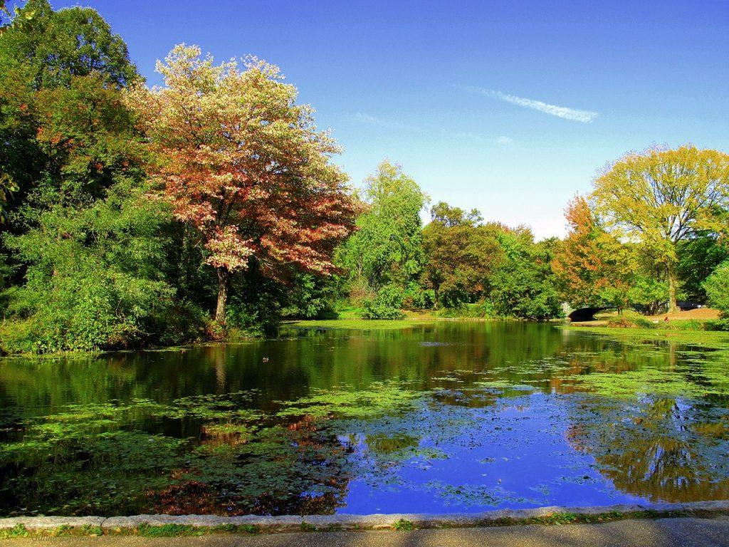 brooklyn-prospect-park